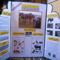 ۴۶- دانلود طرح جابر بن حیان با موضوع حیوانات اهلی و وحشی+ اول ابتدایی